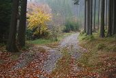 stock photo of bohemia  - view forest road south Bohemia Czech Republic - JPG