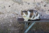 image of domestic cat  - Cat outdoor portrait - JPG