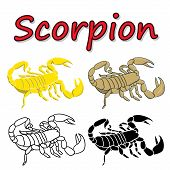 picture of scorpion  - Vector scorpion isolated on white background - JPG