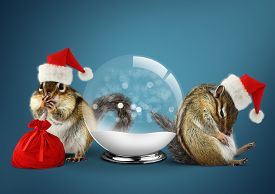 picture of chipmunks  - Funny animals chipmunks dress santa hat with snow ball christmas concept - JPG