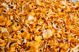 stock photo of chanterelle mushroom  - Pile Of Chanterelle Mushrooms For Cooking - JPG