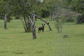 Wild Dog Dangerous Mammal Animal Africa Savannah Kenya poster