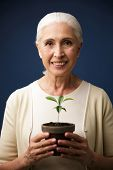 Close-up photo of glad aged woman holding green plant in the spot, looking at camera, over dark blue poster