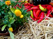 Heap Of Ripe Big Red Peppers At A Street Market, Ripe Red, Green Chili, Autumn Harvest poster