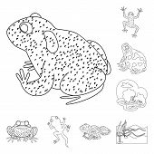 Isolated Object Of Amphibian And Animal Icon. Collection Of Amphibian And Nature Stock Symbol For We poster