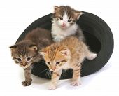 Kittens In A Hat. Three Adorable Kittens Sitting In A Hat Isoalated On White. poster