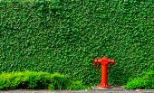 Fire Safety Pump On Texture Background Of Green Leaves Of Ivy Wall In The City On Concrete Floor. De poster