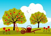 foto of hand-barrow  - vector hand barrow with basket of apples in apple tree orchard - JPG