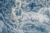 Winter Background Of Frozen Branches. Natural Winter Background. Winter Trees Background. Winter For poster
