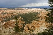 picture of fairyland  - pine trees and hoodoos of Fairyland Point at Bryce National Park Utah USA - JPG