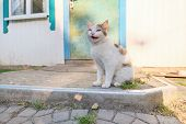 Funny Rural Cat Sitting Near The Door And Meowing. poster