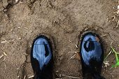 Person Stepping On Bare Terrain. Safety Boot For Walking In The Rural Area. Black Plastic Dirt Boot. poster