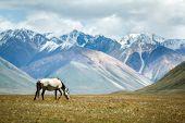 stock photo of feeding horse  - Horse feeding grass - JPG