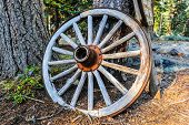 picture of covered wagon  - Old wheel from a covered wagon leans agains a pine tree - JPG