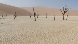 image of sandstorms  - Sandstorm in Deadvlei with some of the highest sand dunes in the world and dead acacia trees - JPG