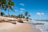 stock photo of rn  - Eroded beach with palms Pititinga Natal  - JPG