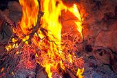 Campfire close up with burning bush