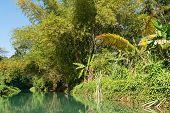 stock photo of martha  - Wilderness along the Martha Brae River Falmouth Jamaica - JPG