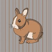 picture of cony  - Vector illustration of fluffy brown  sitting rabbit on striped background - JPG