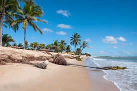 pic of rn  - Eroded beach with palms Pititinga Natal  - JPG