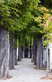 picture of passy  - The historic Passy Cemetery in Paris France - JPG