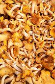 picture of chanterelle mushroom  - Raw fresh chanterelle mushrooms at farmers market - JPG