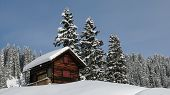 foto of chalet  - Little chalet and firs - JPG