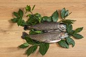 image of brook trout  - two trout on clean wooden floor with bay leaves - JPG