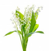 stock photo of white lily  - beautiful bouquet of lily the valley flower is isolated on white background - JPG