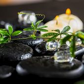 stock photo of tendril  - beautiful spa background of green twig passionflower with tendril ice and candles on zen basalt stones with drops closeup