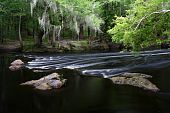 stock photo of suwannee river  - Rapids on the Santa Fe River - JPG