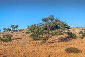 stock photo of atlas  - Landscape of Morocco at summer - JPG