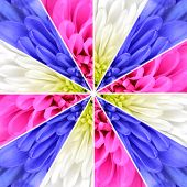 image of symmetrical  - Flower Center Symmetric Collage Made of Collection of Chrysanthemum Flowers - JPG