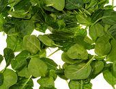 foto of leafy  - Fresh spinach it is a leaf vegetable or leafy green - JPG