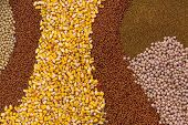 foto of rape-seed  - Various Agricultural Crop Seed as Abstract Full Frame Textured Background - JPG