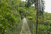 picture of rainforest  - Suspended bridge at natural rainforest park - JPG