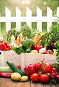 foto of crate  - Assorted fresh vegetables in the crates in the garden  - JPG
