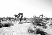 picture of sand gravel  - California Desert in Death Valley with Joshua Trees - JPG