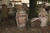 foto of tombstone  - Abandoned tombstones at the Old Jewish Cemetery in Prague - JPG