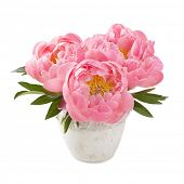 image of vase flowers  - Peony flowers in a white vase - JPG