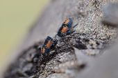 stock photo of nymphs  - Mudgee - JPG