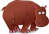 foto of hippopotamus  - Hippopotamus isolated on white background - JPG