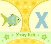 stock photo of animal x-ray  - The English alphabet with X - JPG