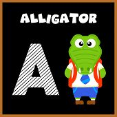 picture of alligator baby  - The English alphabet letter A Alligator  - JPG