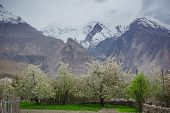 pic of karakoram  - Hunza valley with Blossom in Northern area of Pakistan - JPG