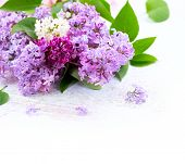 Постер, плакат: Lilac flowers bunch over white wooden background Beautiful violet Lilac flower border design closeu