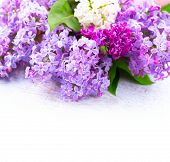 pic of violet flower  - Lilac flowers bunch over white wooden background - JPG