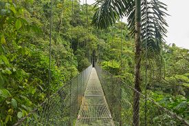 image of rainforest  - Suspended bridge at natural rainforest park - JPG