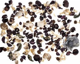 picture of dead plant  - Dead Plant Flower Dried Plant Dry Bouquet on a white background - JPG