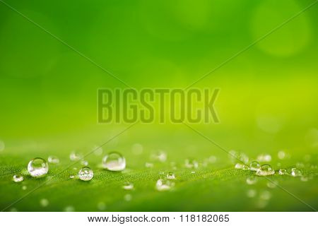 poster of Rain Drops Over Fresh Green Leaf Texture, Natural Background